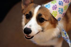 Dárky pro psy