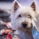 Jak silný čich má pes