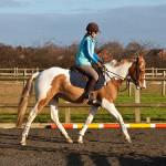 Jak rychle běží závodní kůň