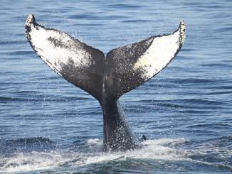Jak vytrhnout velrybě stoličku