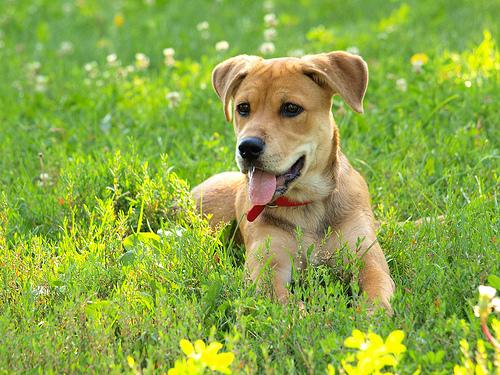 Jak často venčit psa