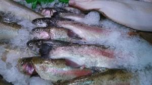 Zmrazením ryba ztrácí na kvalitě