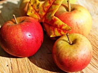 Jaké jídlo na podzim?