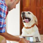 Jak často krmit psa