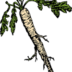 Jak odstranit ze zahrádky křen