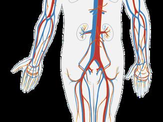 Jak lze pečovat o cévy?