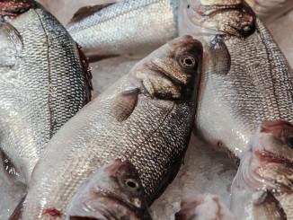 Jak nám prospívají ryby?