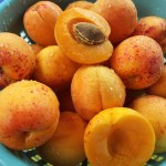 Co obsahují meruňková jádra?