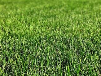 Kdy zalévat trávník