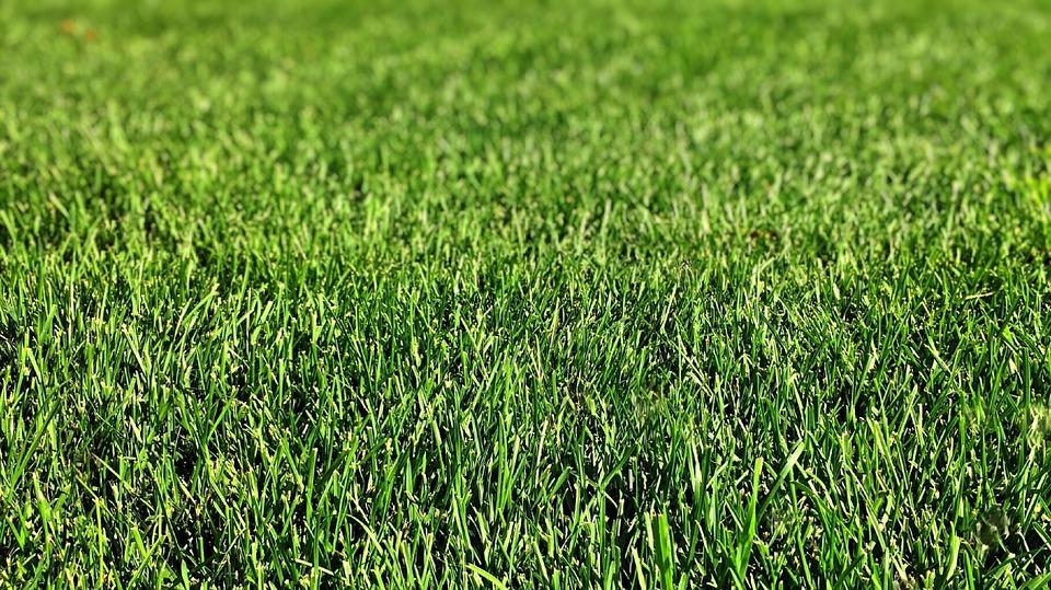Jak upravit trávník před příchodem zimy?