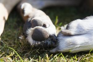 Jak správně stříhat psovi drápky?