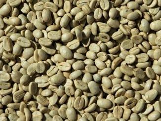 Co je zelená káva?