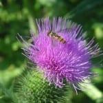 Tipy na přihnojování rostlin