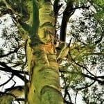 Značení stromků v lese