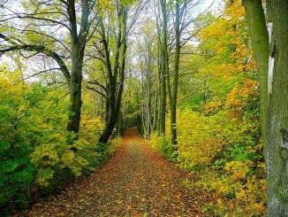 Jaké účinky mají lesní bylinky?