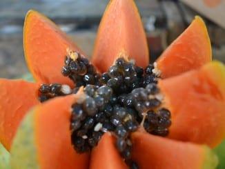 Jak pěstovat papáju?