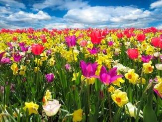 Jak připravit zahradu na jarní výsadbu?