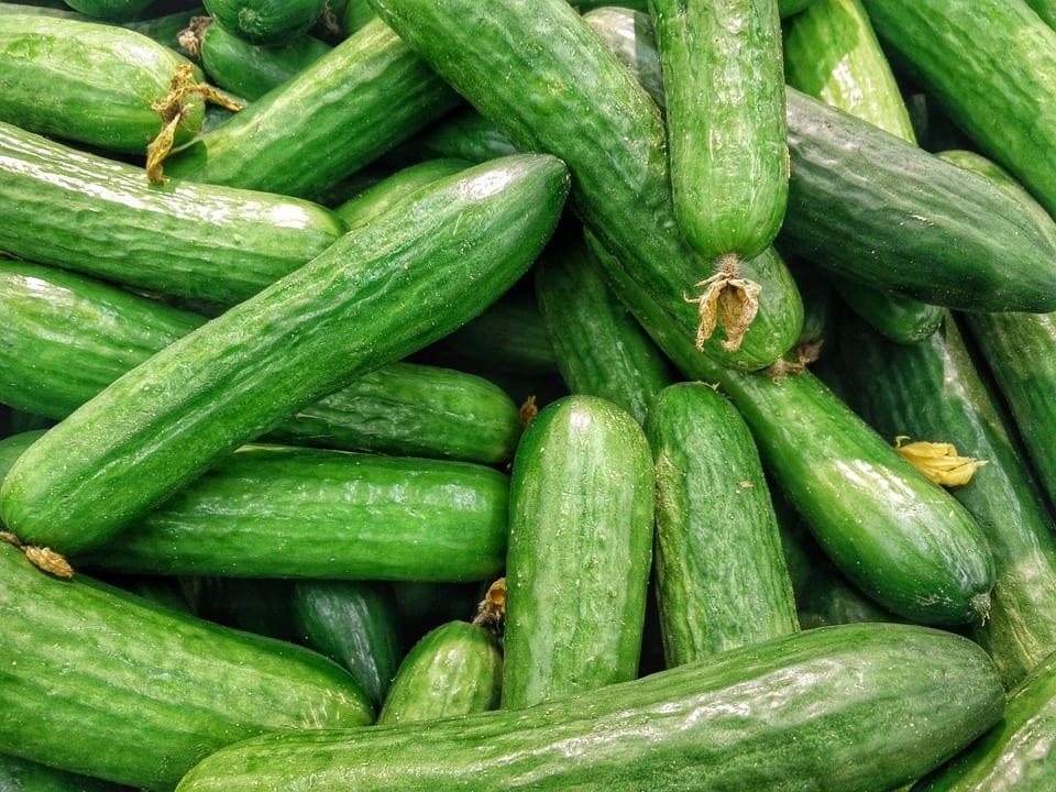 Jak prospívá salátová okurka?