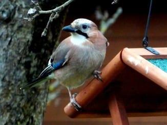 Jak vyrobit krmítko pro ptáčky?