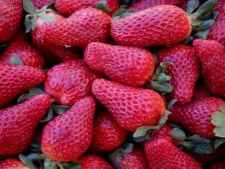 Jak prospívají jahody?
