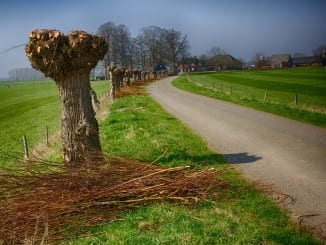 Jaké účinky má vrbová kůra?