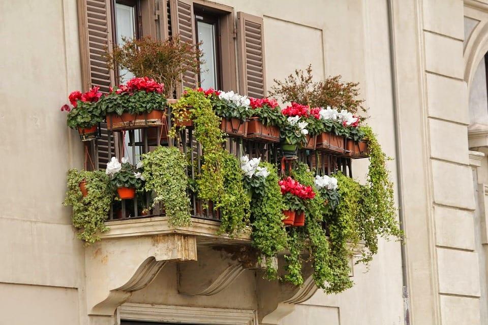 Jaké rostliny pěstovat na balkoně?