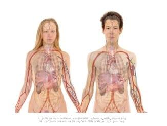 Jak pracují naše orgány v průběhu 24 hodin?