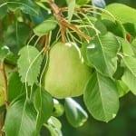 Jak využít citronovou kůru?