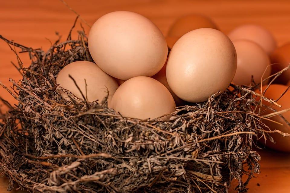 Jak prospívá vejce?