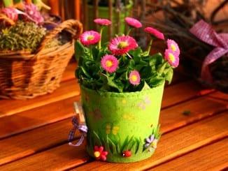 Jak zasadit jarní cibulky?