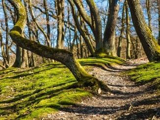Jaké stromy nám pomohou na jaře doplnit energii?