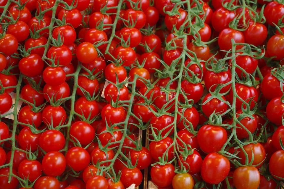 Jak pěstovat rajčata na balkoně?