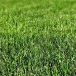 Jak vyrobit kvalitní hnojivo pro vaši zahrádku?