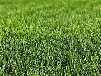 Jak udržovat trávník bez plevele?