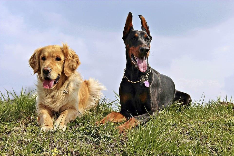 Jaké signály značí vážné nemoci u psů?
