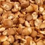 Jak připravit tekuté houbové koření?