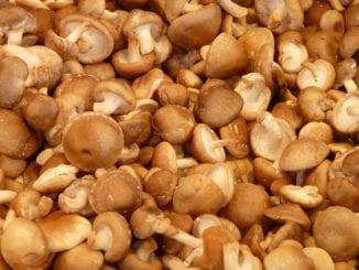 Jaké houby mají léčivé účinky?