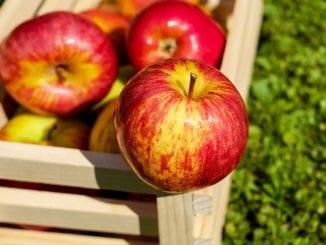 Jaké ovoce prospívá kráse?