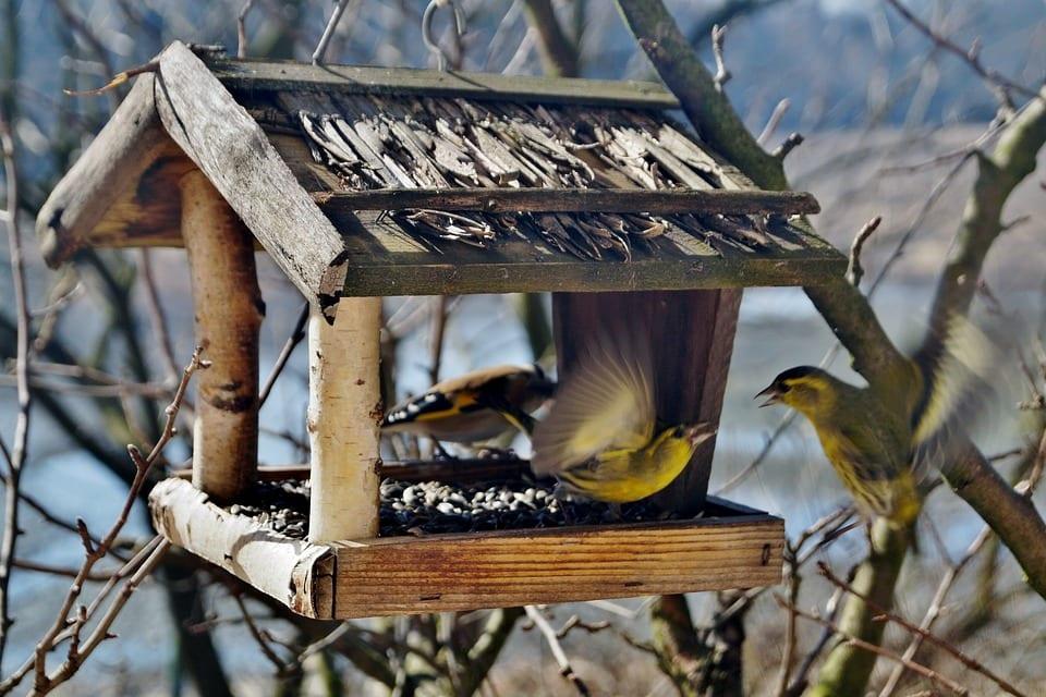 Jak přikrmovat ptáčky v zimě?
