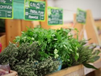 Jaké léčivé rostliny by měla obsahovat domácí lékárnička?