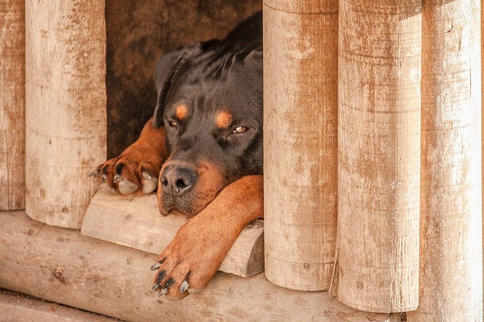 Jak připravit psí boudu na zimu?