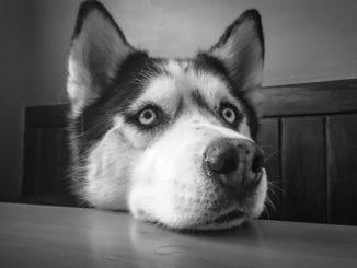 Co by neměl jíst váš pes?