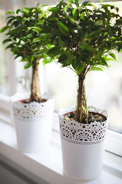 Jak pečovat o pokojové rostliny v zimě?