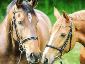 Která zvířata se využívají při terapiích?