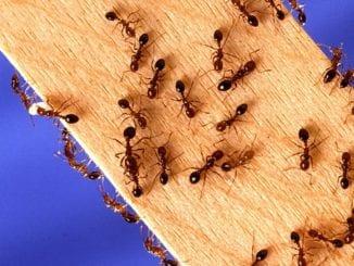 Jak se zbavit hmyzu v kuchyni?