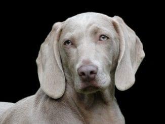 Které potraviny psům škodí?