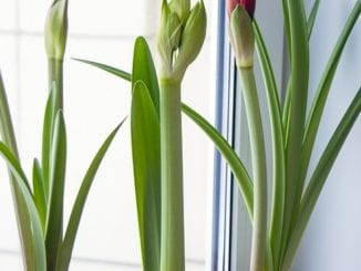 Jak na výrobu domácího výživného hnojiva?