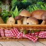 Jak rychle nakrájet houby