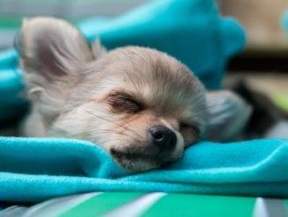 Jak vyhrát boj s podzimní únavou?