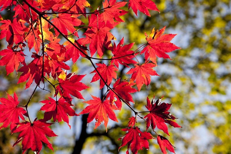 Jak pečovat o zahradu na podzim?